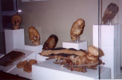 Inca_museum_skulls