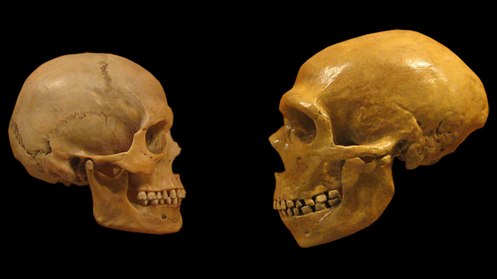 45894-skulls