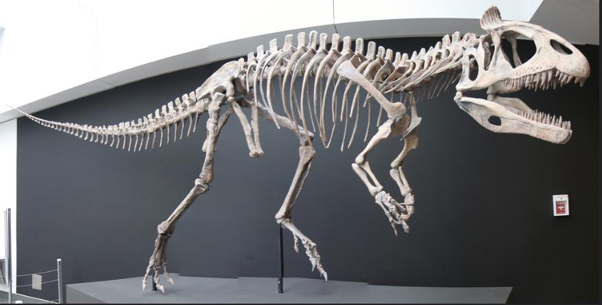 Cryolophosaurus_ellioti